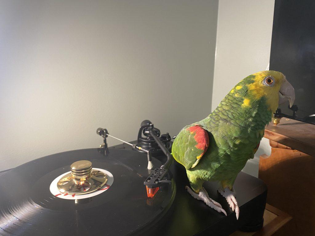 hifi chicken